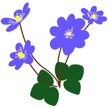 blasippa and a flower and Hepatica